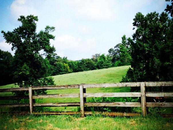 springer_mountain_farms