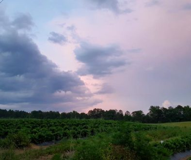whitted_farms
